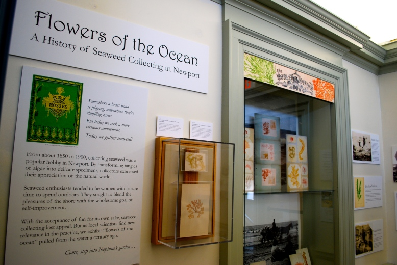 Flowers of the Ocean exhibit at the Museum of Newport History.